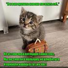 https://lolkot.ru/2020/05/04/navechnoye-poseleniye/