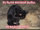 https://lolkot.ru/2011/11/27/ne-bylo-ryby/