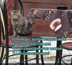 https://lolkot.ru/2014/04/02/ne-izmenyay-privychek/