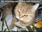 https://lolkot.ru/2013/01/23/ne-nayti-podhod/