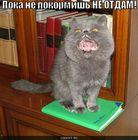 https://lolkot.ru/2010/07/15/ne-otdam/