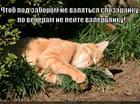 https://lolkot.ru/2014/06/30/ne-pey-2/