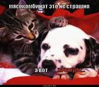 https://lolkot.ru/2011/06/18/ne-strashno/