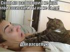 https://lolkot.ru/2013/06/17/ne-zhri-moi-sosiski/