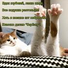 https://lolkot.ru/2018/01/25/nebroskaya-berezka/