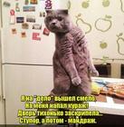 https://lolkot.ru/2017/03/12/nedolgovechnyy-kurazh/