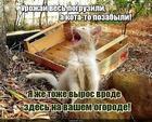 https://lolkot.ru/2020/04/08/nedosobrannyy-urozhay/