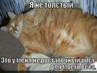 https://lolkot.ru/2013/01/23/nedostatochnyy-rost/