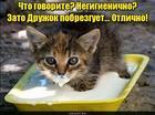 https://lolkot.ru/2017/07/09/negigiyenichnaya-radost/