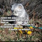 https://lolkot.ru/2016/04/05/nelepoye-pozdravleniye/