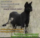 https://lolkot.ru/2020/02/06/nenaprasnyy-shedevr/