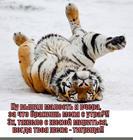 https://lolkot.ru/2015/05/12/neposlushnyy-tigromuzh/