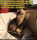 https://lolkot.ru/2020/08/09/nepovod-dlya-znakomstva/