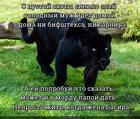 https://lolkot.ru/2020/05/10/neprostaya-zhena/