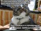 https://lolkot.ru/2014/03/20/nerealnyy-kotyarka/