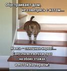 https://lolkot.ru/2021/02/08/nervotrepeschuscheye-obustroystvo/