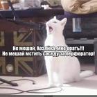 https://lolkot.ru/2020/06/25/neukrotimyy-mstitel/