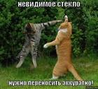 https://lolkot.ru/2009/11/25/nevidimoye-steklo/