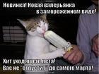 https://lolkot.ru/2013/08/12/new/