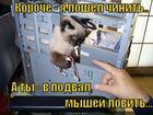 https://lolkot.ru/2012/10/23/nezamenimyh-net/