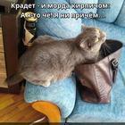 https://lolkot.ru/2018/08/20/niprichemnyy-kirpich/