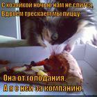 https://lolkot.ru/2014/12/13/nochnoy-perekus/