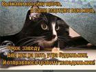 https://lolkot.ru/2013/05/10/nochnoy-razboynik/