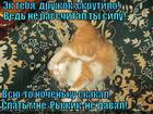 https://lolkot.ru/2015/08/14/nochnyye-poskakushki/