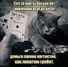 https://lolkot.ru/2020/05/08/novichkovoye-vezeniye/