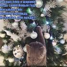 https://lolkot.ru/2017/11/22/novogodnyaya-podkotovka/