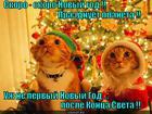 https://lolkot.ru/2012/12/29/novyy-god-vs-konets-sveta/