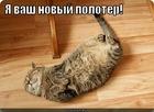 https://lolkot.ru/2011/06/06/novyy-poloter/