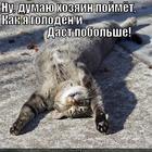 https://lolkot.ru/2013/11/06/nu-dumayu/