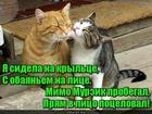 https://lolkot.ru/2019/06/04/obayatelnoye-kryltso/