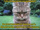 https://lolkot.ru/2012/06/22/obideli-nezasluzhenno/