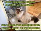 https://lolkot.ru/2014/10/20/obman-mashina/