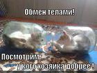 https://lolkot.ru/2013/01/08/obmen-telami/