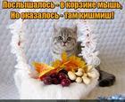 https://lolkot.ru/2017/01/12/oboznalsya-2/
