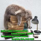 https://lolkot.ru/2017/10/18/ochki-dlya-umnosti/