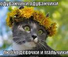 https://lolkot.ru/2012/10/27/oduvanchiki-2/