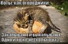 https://lolkot.ru/2014/01/20/ogorodniki-2/