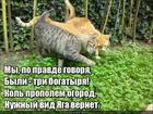 https://lolkot.ru/2019/07/13/ogorodnyye-bogatyri/