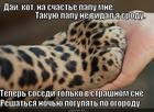https://lolkot.ru/2014/02/11/ogurtsy-i-morkva-pod-zaschitoy-kota/