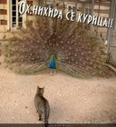 https://lolkot.ru/2011/11/26/oh-nihira-se-kuritsa/