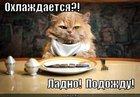https://lolkot.ru/2012/02/19/ohlazhdayetsya/