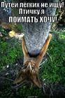 https://lolkot.ru/2013/11/05/ohotnik-2/