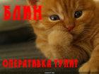 https://lolkot.ru/2011/02/03/operativka-tupit/