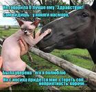 https://lolkot.ru/2017/10/31/oprometchivoye-znakomstvo/
