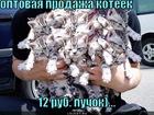 https://lolkot.ru/2011/09/24/optovaya-prodazha/