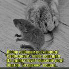 https://lolkot.ru/2014/03/17/orator/
